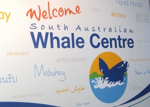 SA Whale Centre welcome wall decal mural