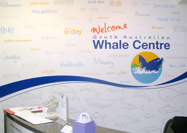 SA Whale Centre welcome wall and branding decal mural
